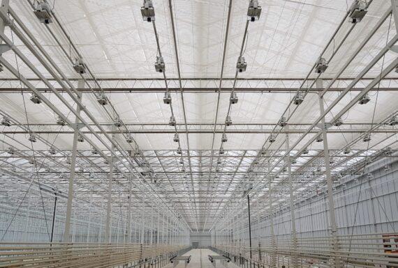 Sunens Cannabis Greenhouse